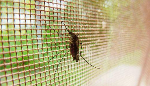 虫除け選び、赤ちゃんやペットいる室内で注意すること